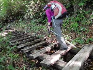 木段の道が続きます