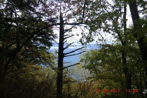 木々の間からの眺め