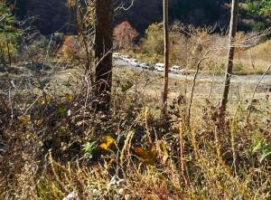一般車通行止めの林道です。杉やヒノキの伐採跡地に広葉樹を植樹します。