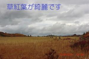 6.草紅葉が綺麗