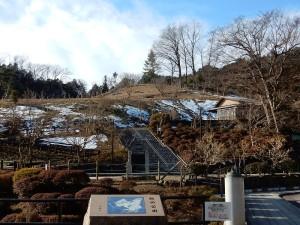 平成26年5月にすべて伐採されてしまった公園にちいさな梅ノ木が植えられていました