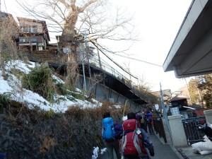 樹齢600年、天然記念物の神代ケヤキの見上げてケーブル駅に向かいます。