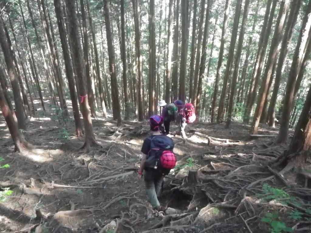 残りは一般登山道で下ります